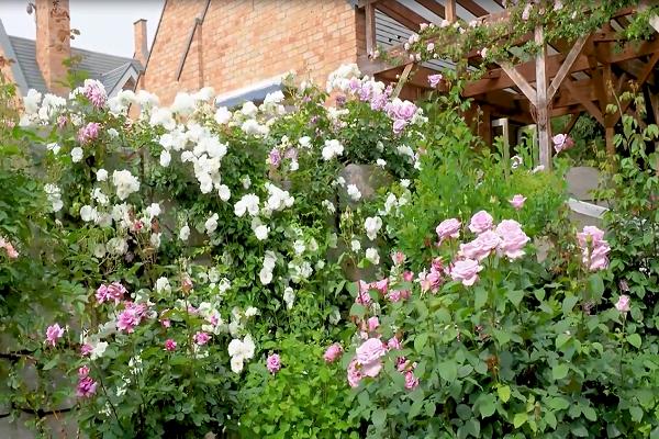 自然文化专题片-百花园